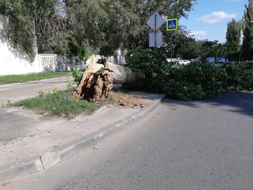Сильный ветер обрушится завтра на Волгоград и область