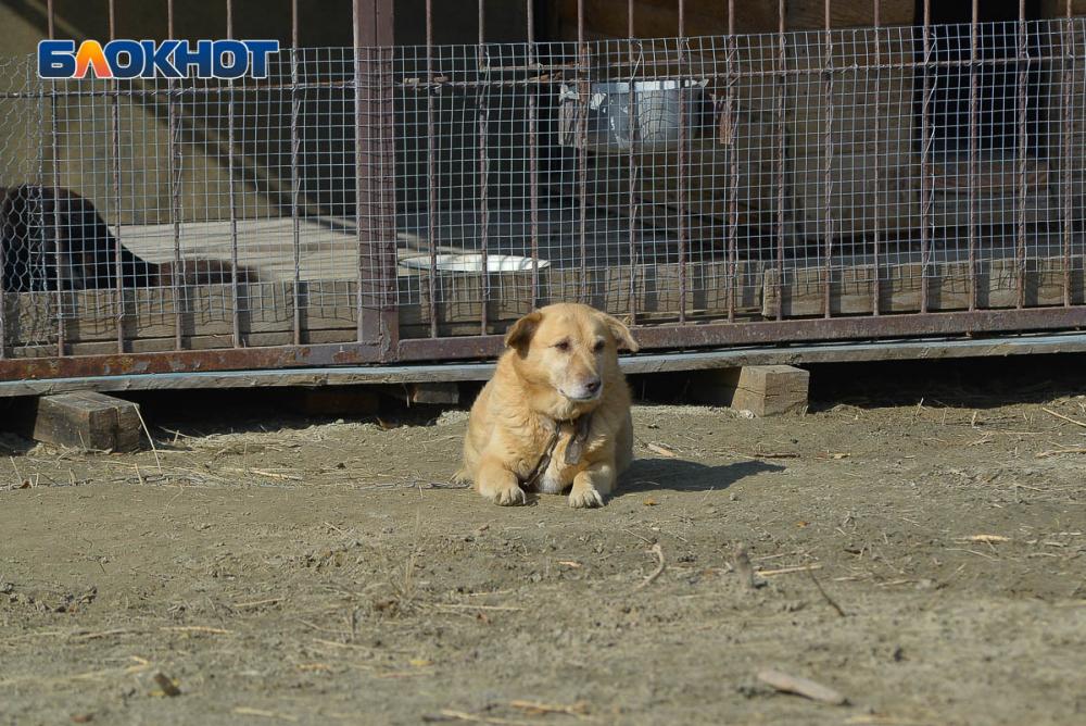 В Волгограде 685 бродячих собак выжили из-за мошенника