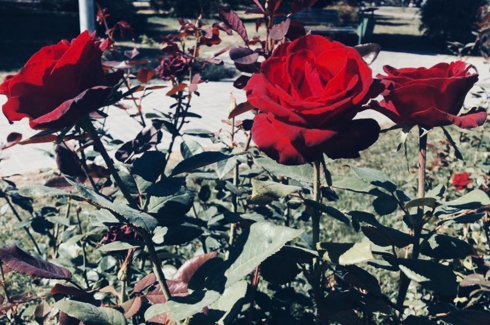 Море роз и дизайнерские изделия в подарок: волгоградцев ждет крупный цветочный праздник
