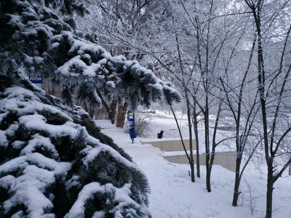 Ночью мороз, днем тепло: волгоградцы почувствуют резкую перемену погоды