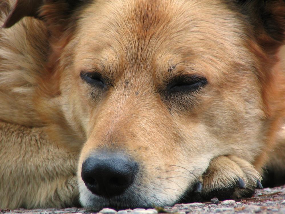 Волгоградских бродячих собак отстреливать не будут