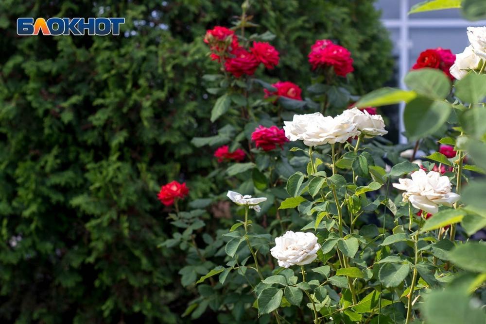 В Волгоград пришло мягкое лето