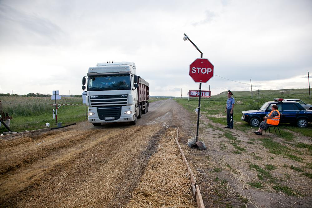 В 8 районах Волгоградской области введены карантинные посты из-за угрозы АЧС