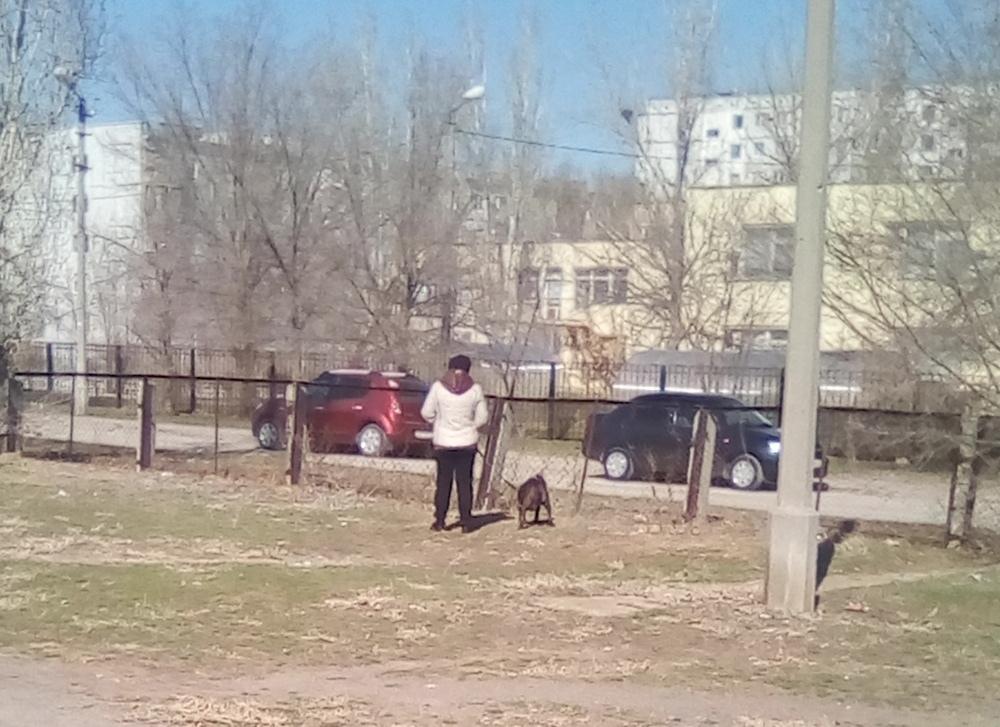 Волжан испугала бабушка с питбулем на школьном дворе