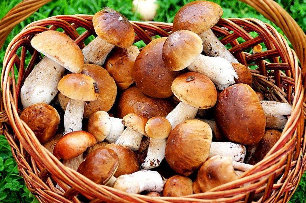 В Волгоградской области 37 человек отравились грибами
