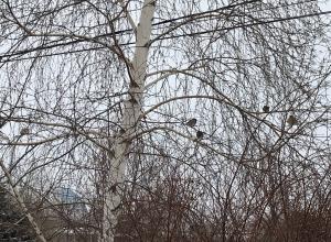 Почти во всех частных домах Волгоградской области до сих пор нет централизованного отопления