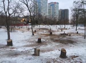 В Волгограде снова вырубают деревья