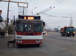 Хорошее видео – это когда мне угрожают, – автор разоблачительного канала о волгоградском транспорте
