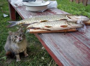 Из-за рыбного ужина оборвалась беззаботная жизнь 50-летнего жителя Чернышковского района