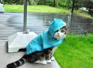 Дожди будут заливать Волгоград все выходные