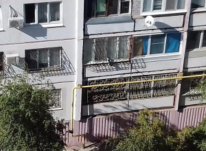 На видео попала операция по спасению из «москитного плена» кота в Волгограде