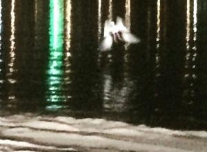 Житель Волгограда случайно сфотографировал над Волгой фею