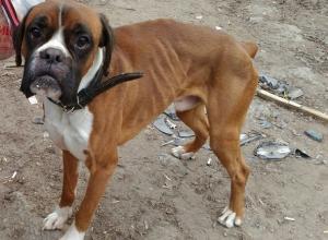 Волонтеры Волгограда спасли погибающего породистого пса