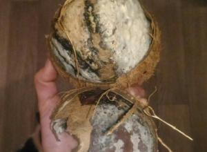 Волгоградка купила в супермаркете кокос с зародившимися цивилизациями