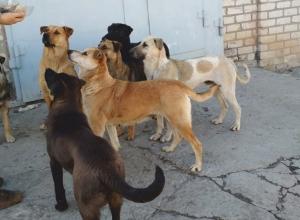 Стая бездомных собак разделила волгоградцев на два воюющих лагеря