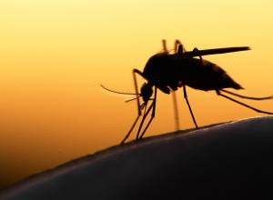 Комаров и мошку в Волгограде стали травить при помощи авиации