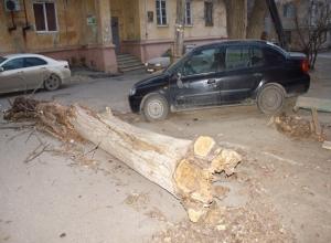 Управляющая компания Волгограда отказывается отвечать за рухнувшее на автомобиль сухое дерево