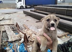 Волонтеры просят спасти трех щенят от поедания заключенными в Волжском