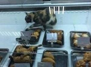 Волгоградцев возмутила кошка среди котлет и пирожков в супермаркете