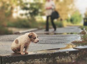 Отстрел бездомных собак запретили депутаты Волгоградской облдумы