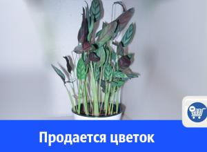 Продается цветок, который шевелит листьями