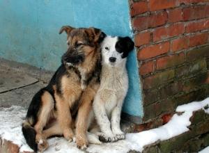 Поедание собак в Волгограде - не единичный случай, а настоящий бизнес, - Анжела Макарова
