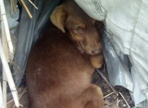 Живодеры в упор расстреляли маленького щенка в Волгограде