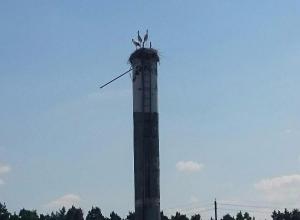 В Волгоградской области обнаружили гнездо краснокнижного филина