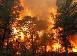 В Волгограде готовятся к крупным пожарам