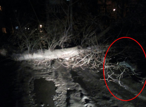 «Пятнадцатую» раздавило рухнувшим деревом на юге Волгограда