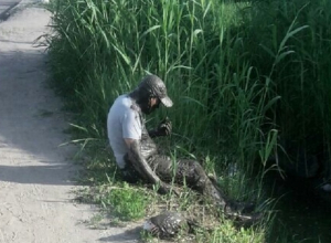 Волгоградец сфотографировал «Шрека», вылезшего из канавы