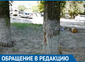 Рухнувший на балкон многоэтажки тополь едва не убил мужчину на юге Волгограда
