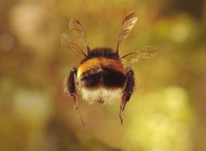 Из-за пчелиного семейства не смогли по-человечески развестись супруги из Волгоградской области