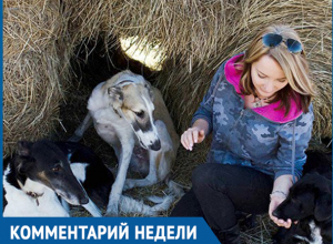 Собаки в стаях опасны, а отстрел в Волгограде не дает результата, - Анжела Макарова