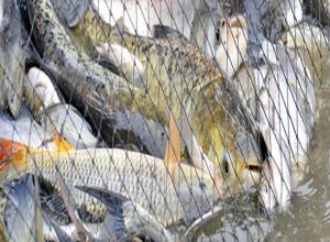 Под Волгоградом браконьера оштрафовали на 300 тысяч рублей