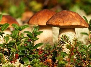 Во время сбора грибов женщина обнаружила череп  в лесополосе под Волгоградом