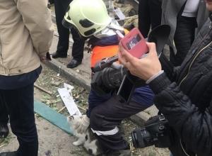 Сотрудник МЧС спас окровавленного кота из-под обломков взорвавшегося дома в Волгограде
