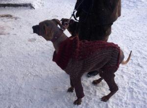 «Блокнот Волгограда» нашел кутюрье для спасения облысевшей собаки из приюта «Дино»