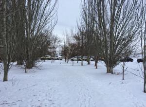 Перепадами температур от +4ºС до -11ºС испытывает весна волгоградцев