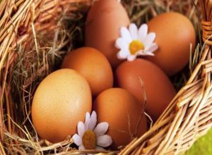 В Волгоградской области стало больше яиц