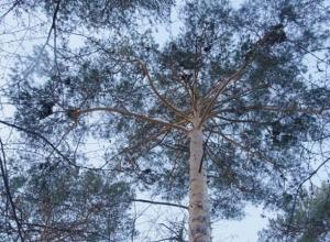 Житель Волгоградской области со страху закопал приятеля в лесу