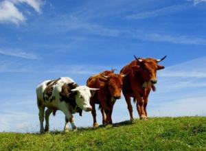 Волгоградского фермера оштрафовали за жизнь в навозе