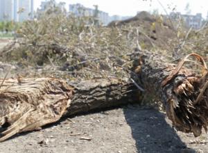 Кощунственное уничтожение парка у подножия Мамаева кургана на видео сравнили с разрушенным Сталинградом
