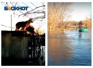Возмущенный гондольер и овчарка на крыше: волгоградская Венеция попала на видео