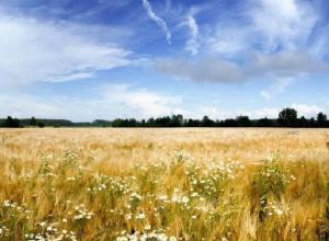 Связанный по рукам и ногам фермер умер в поле под Волгоградом после нападения гастарбайтера