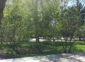 Дневная жара сменяется ночной прохладой в Волгограде