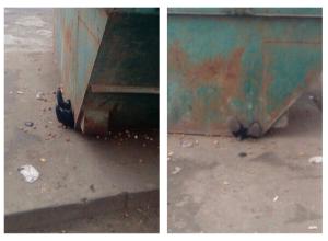 Раздавленным мусорным контейнером человеком пугают волгоградцев