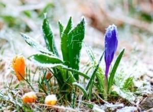 Экстренное предупреждение: в Волгоградской области ожидаются заморозки