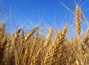 Волгоградская область на грани возможной аграрной катастрофы
