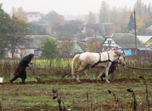 Волгоградские чиновники сдают землю в аренду и на этом зарабатывают